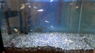 熱帯魚用水槽リセット中